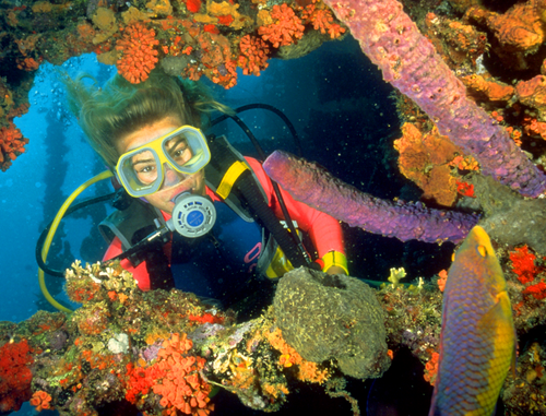 dive-abaco