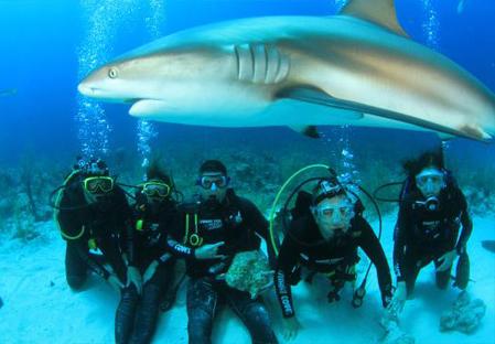 stuart-cove-s-dive-bahamas