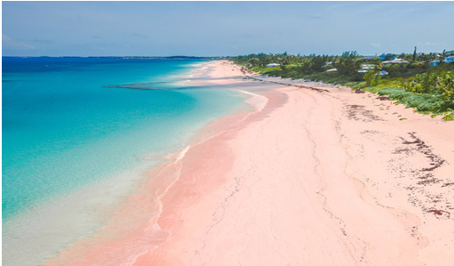 Pink Sand Beach (Harbour Island)